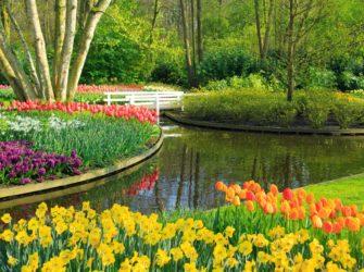 gartenpflege-park-pflanzen