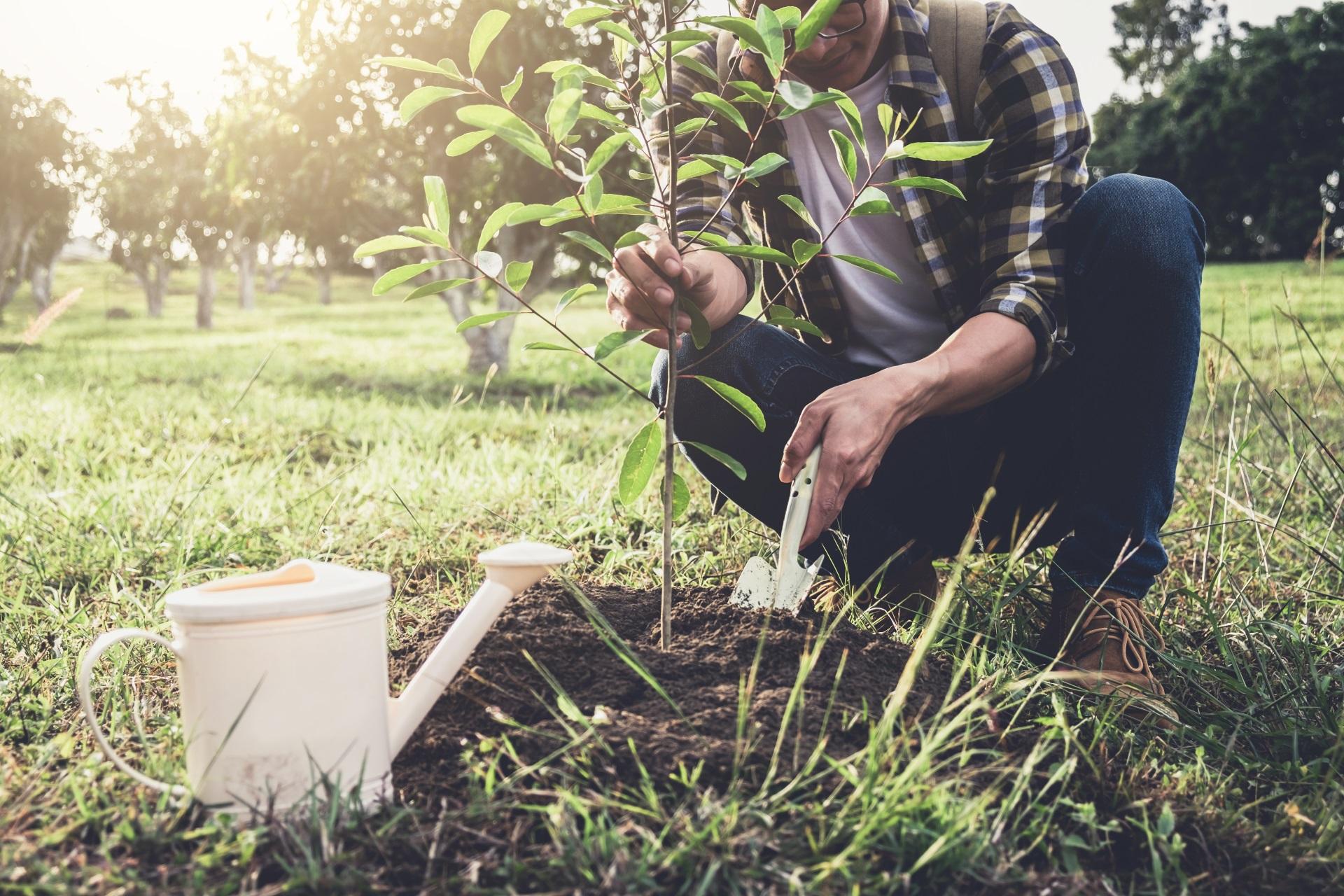 pflanze-online-bestellen