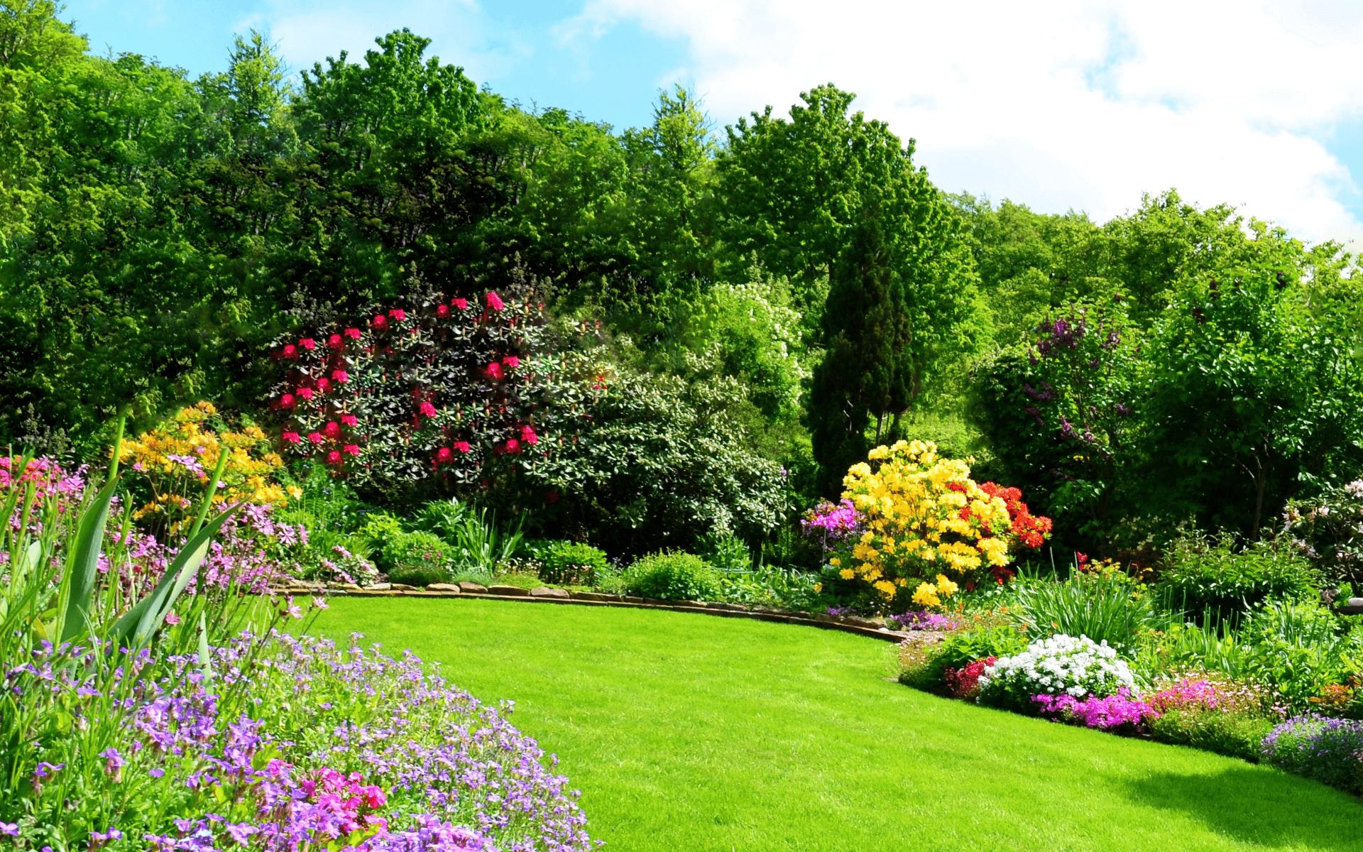 Stauden-fuer-den-Garten-sowie-Vorgarten